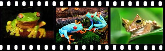 Frogs Screensaver